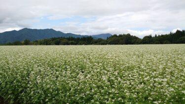 【福島 南会津】下郷町 猿楽台地のそば畑