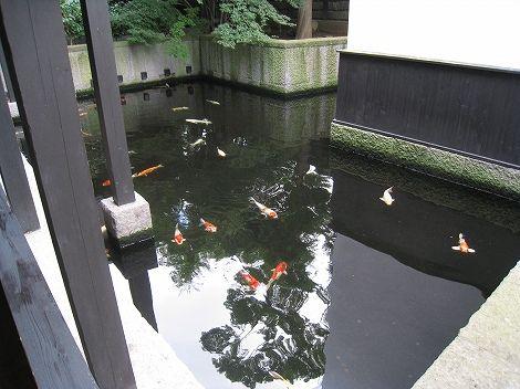 masuichi111.jpg